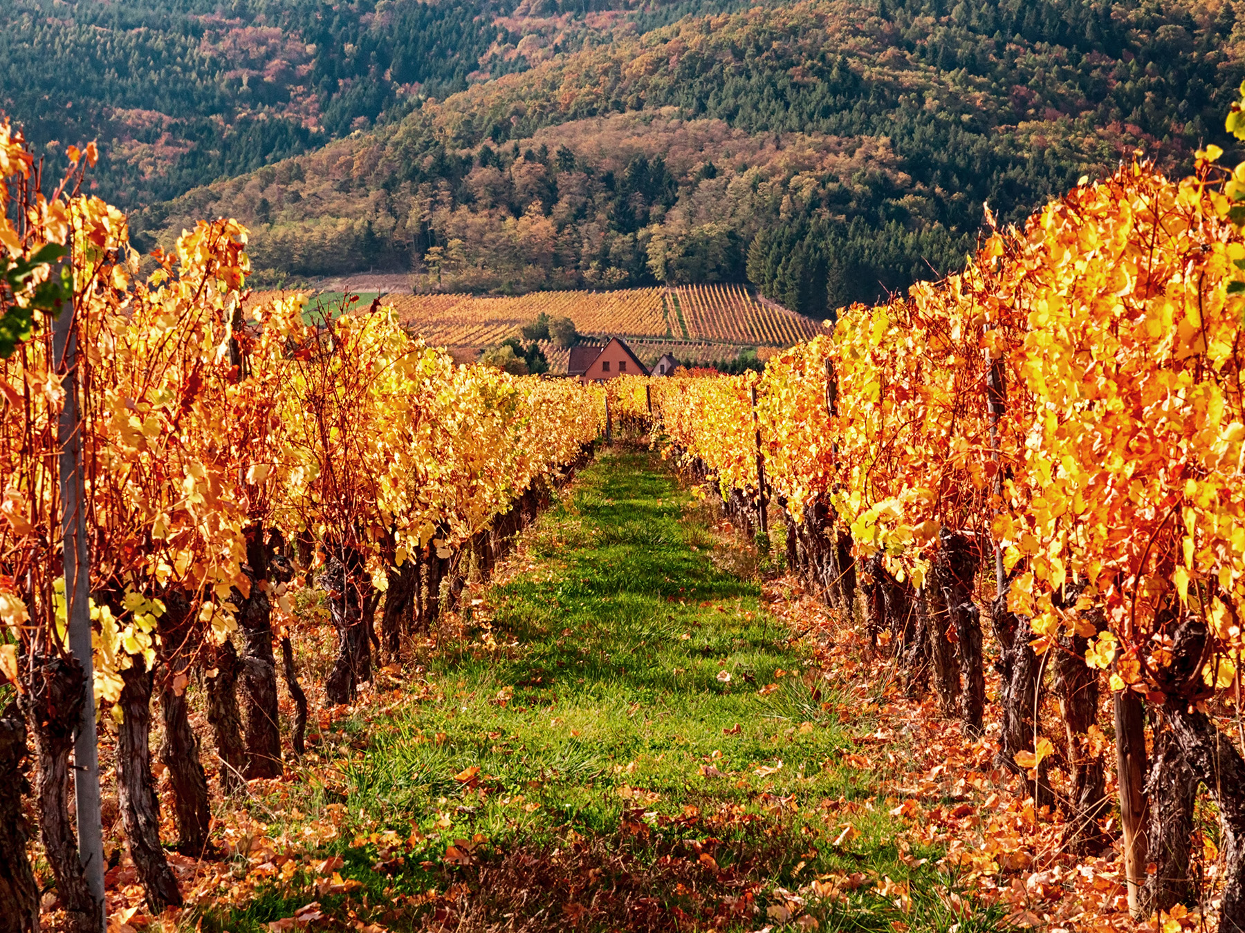 Wines from Alsace